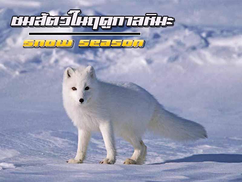 หิมะตกเราสามารถชมสัตว์อะไรในฤดูนี้ได้บ้าง